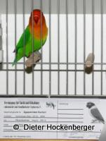 VZE Siegervogel 2013